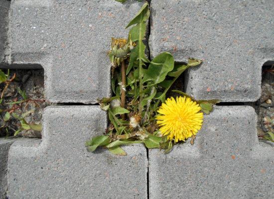 Dal cemento non nasce niente (soprattutto se è tossico)